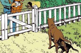 chiens02.jpg
