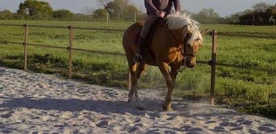 carrière de travail pour le cheval