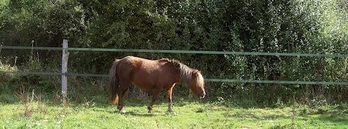 contient bien les poneys tétus