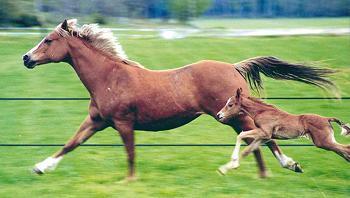 le cheval fuit