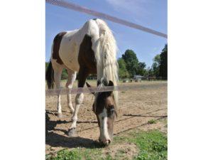 cloture electrique cheval